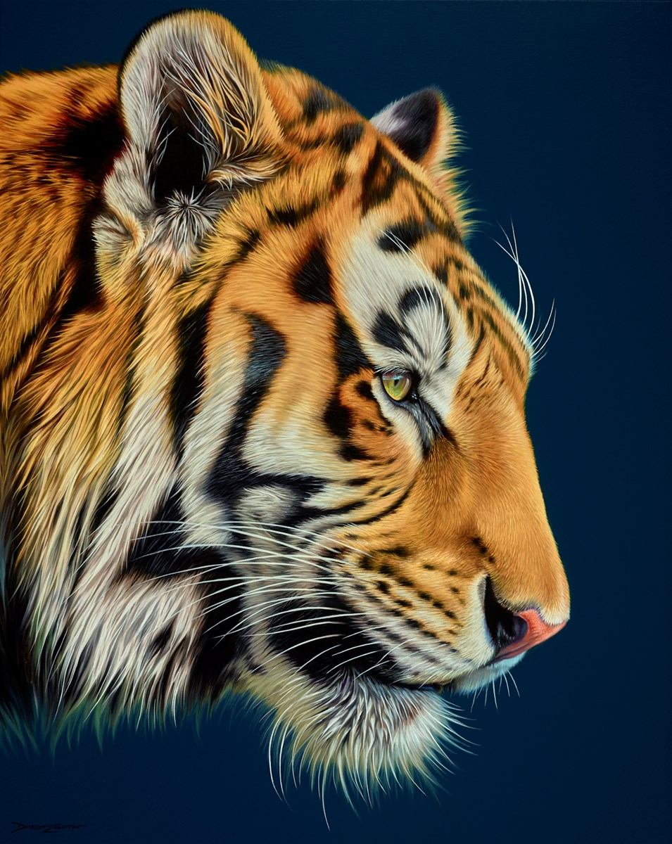 Tiger by darryn eggleton -  sized 32x40 inches. Available from Whitewall Galleries